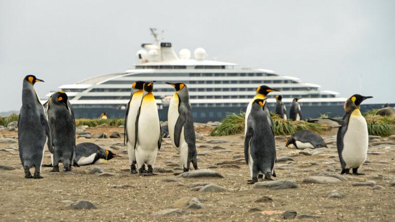Scenic Eclipse - Falklands King Penguins 2 - Niko Paulin